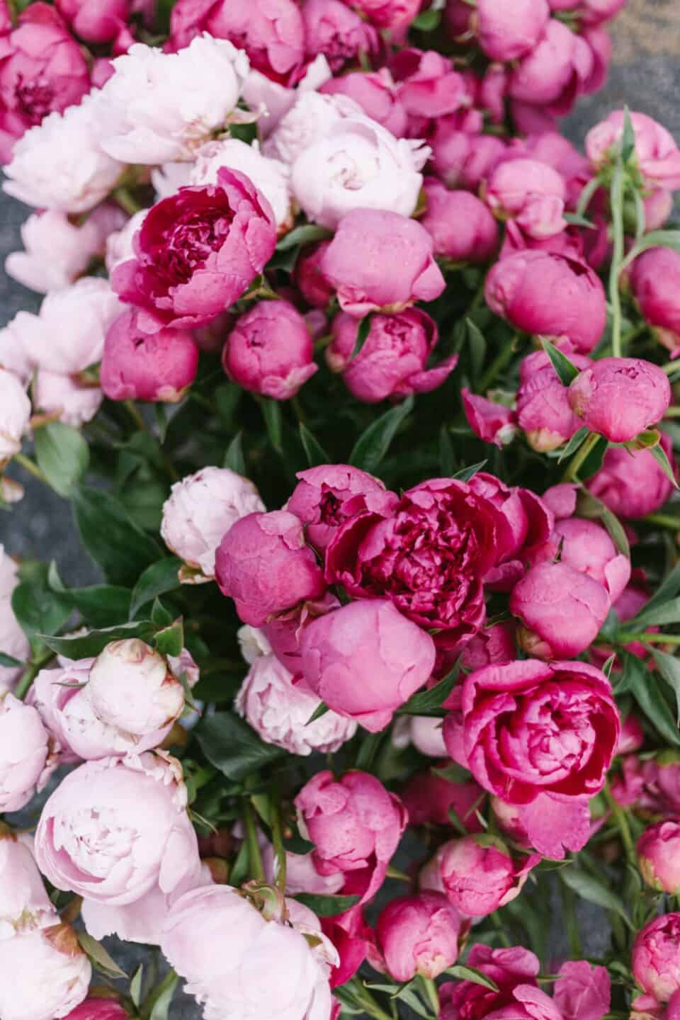 20 Wellness Goals for a Healthier 2020 // pink peonies, flowers